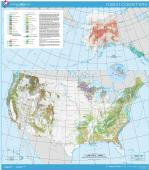 USA forest cover map