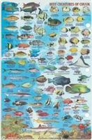 Truk fish card