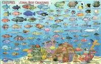 Cozumel reef fish card