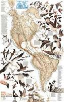 Rhode Island Migratory Bird